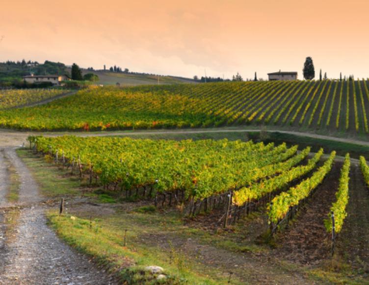 degustazione vino valpolicella nelle terre dell amarone